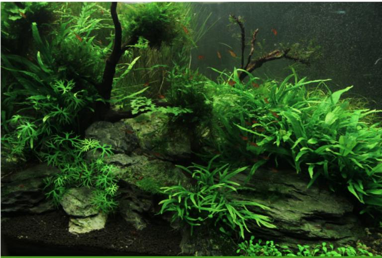 Algas em aquários