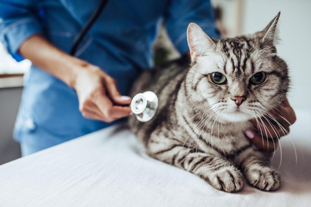 hormonstörungen bei katzen