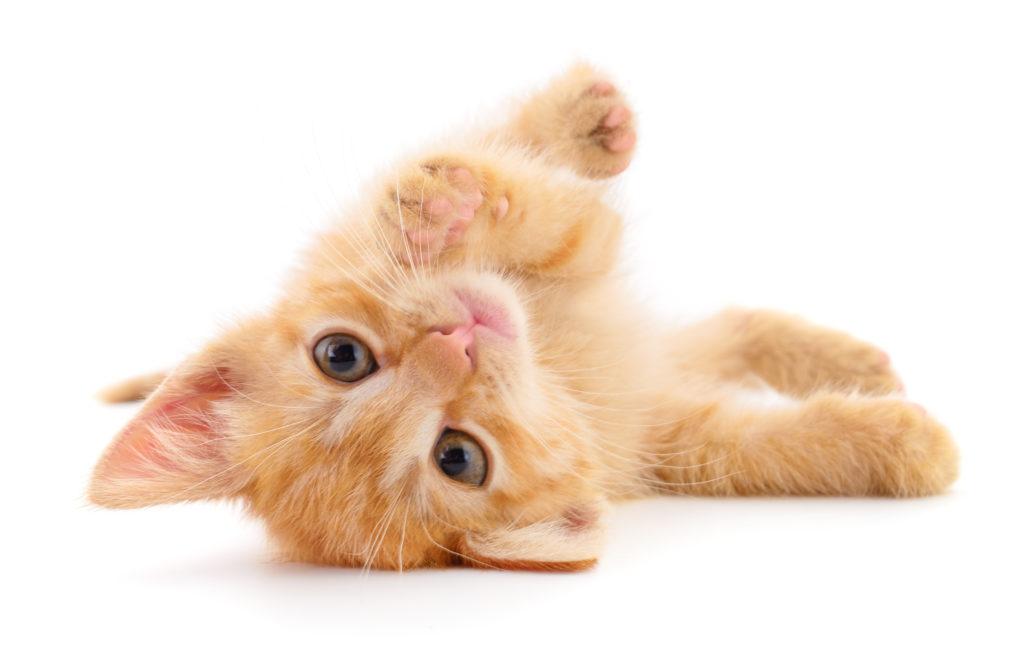 süss kitten