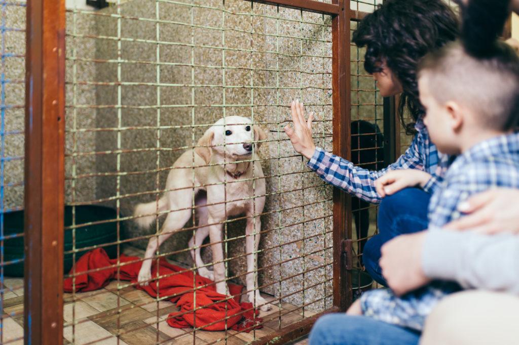 Hund im Käfig eines Tierheims