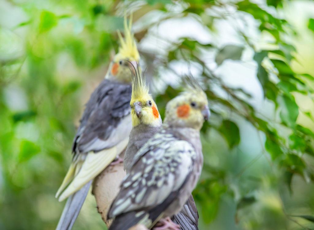 Ziervögel Haltung
