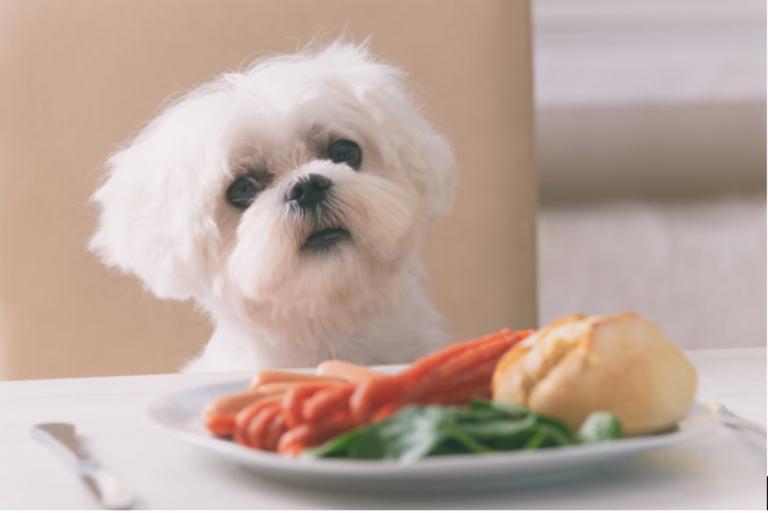 lista de alimentos que não deve dar ao seu cão