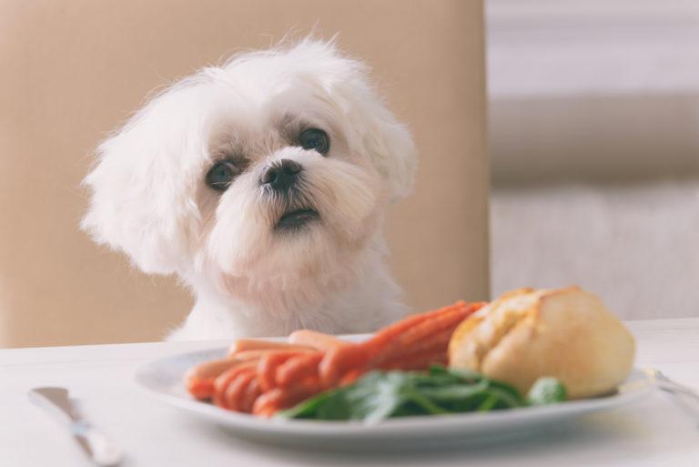 Alimentos que os cães não devem comer: descubra quais os alimentos que os cães não devem comer e os que são inofensivos.