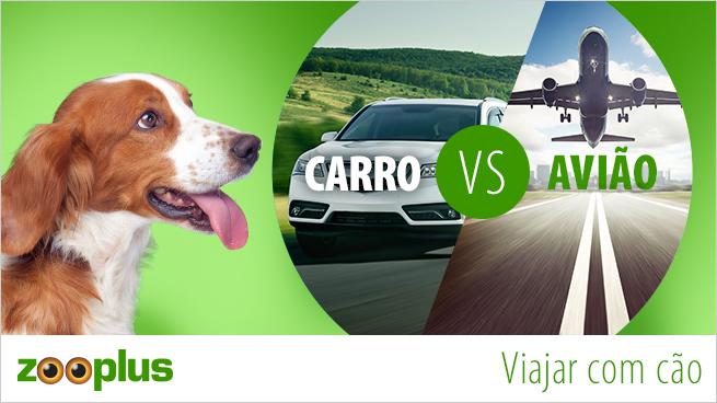 Qual é a melhor opção para viajar com cães: carro ou avião?
