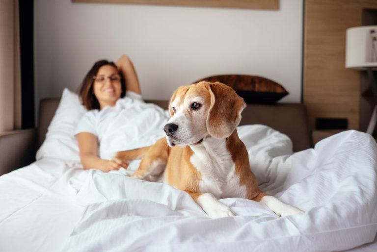 Partilhar a cama com o nosso cão
