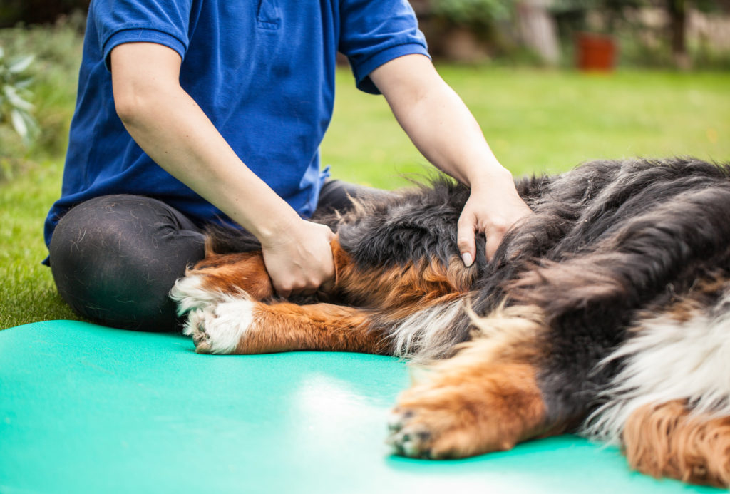 Physiotherapie bei Arthrose Hund