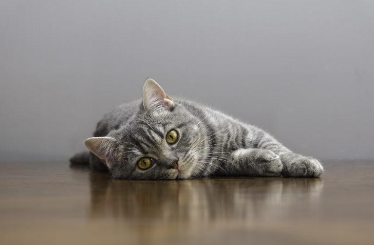 Reprodução dos gatos