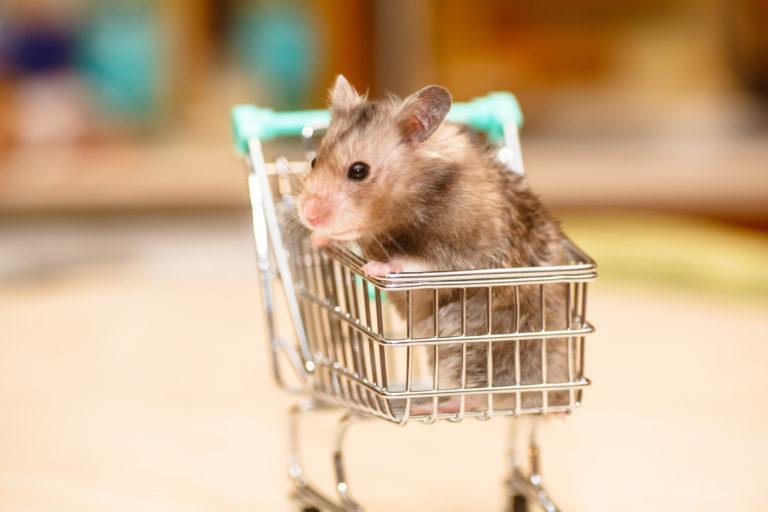 Acessórios para roedores
