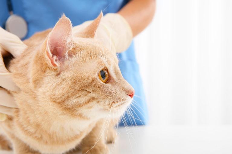 Doenças neurológicas em gatos