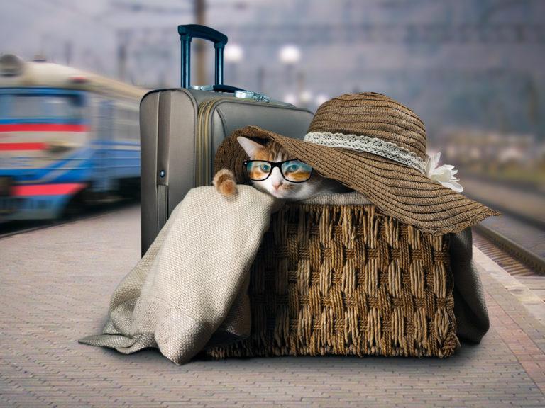 Viajar em transporte público com gatos