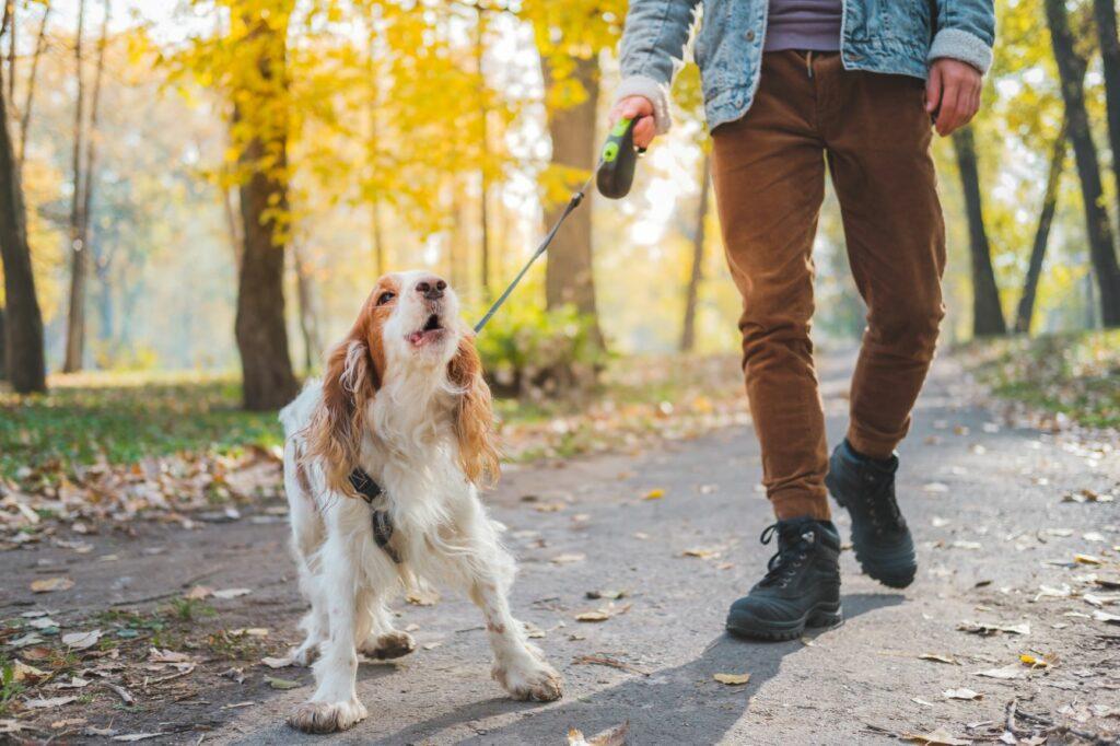Como habituar o seu cão a ladrar menos: alguns truques podem ser a solução
