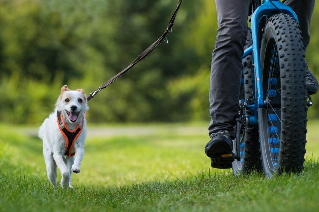 Passear de bicicleta com o seu cão: cuidados a ter