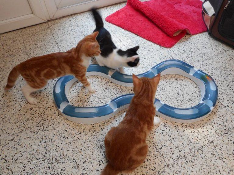 Brinquedos de inteligência para gatos