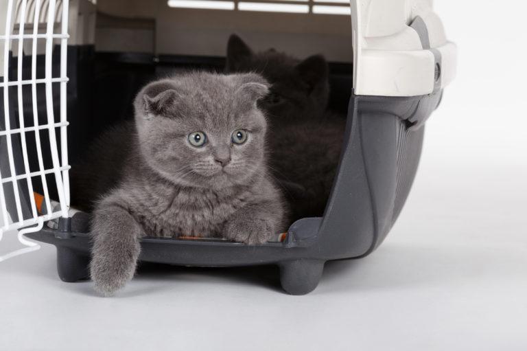 Viajar de avião com gato