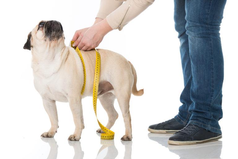 Comida para cães com excesso de peso