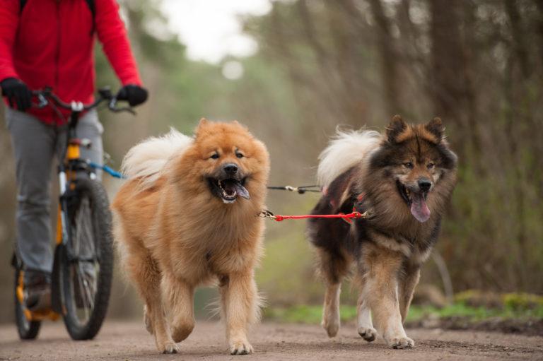 Para passear de bicicleta com o seu cão: uma atividade relaxante