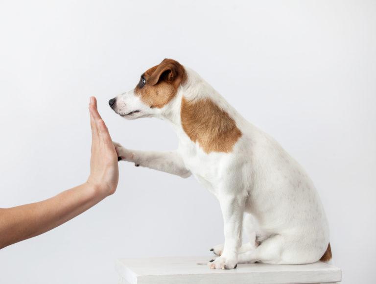 Socializaçao dos cachorros