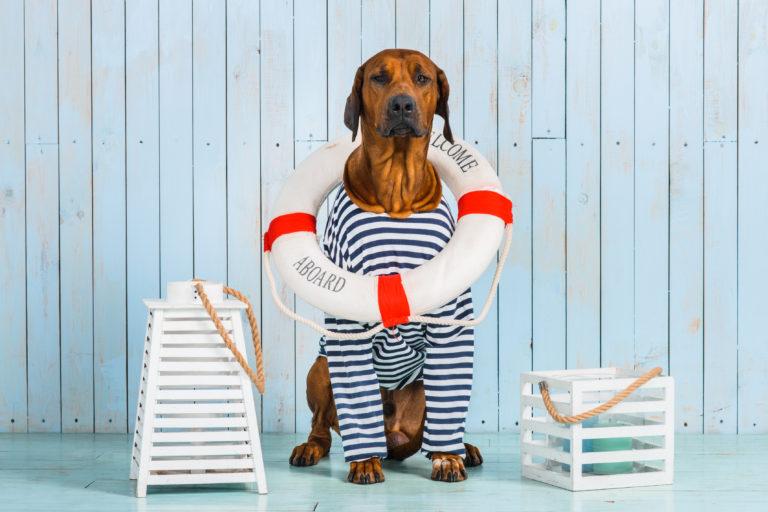 Viajar de barco com cão