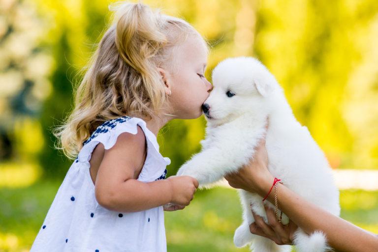 Abraçar e beijar animais