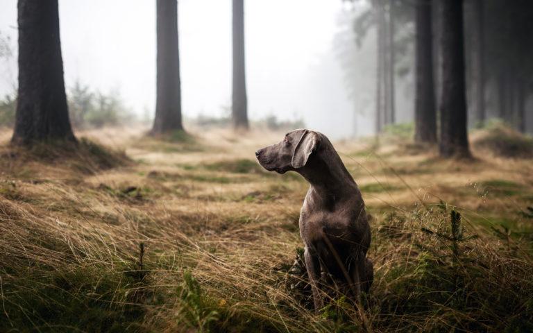 Instinto de caça dos cães