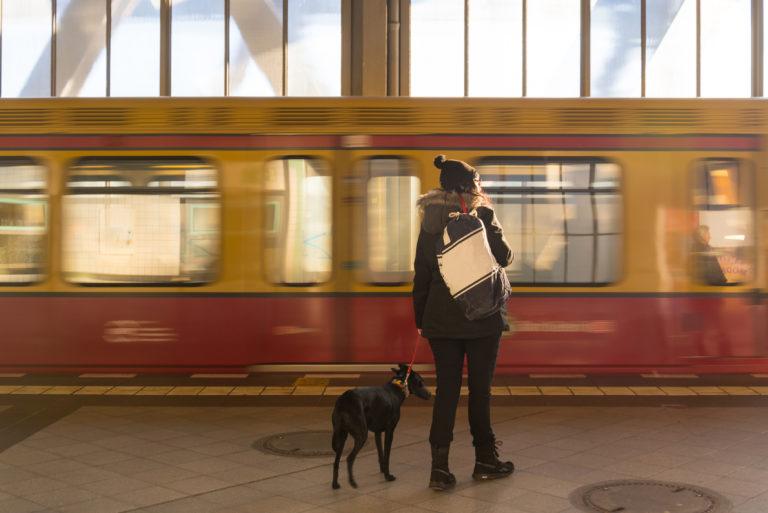 Viajar de comboio com cão