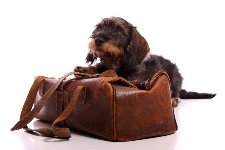 Enjoos dos cães em viagem