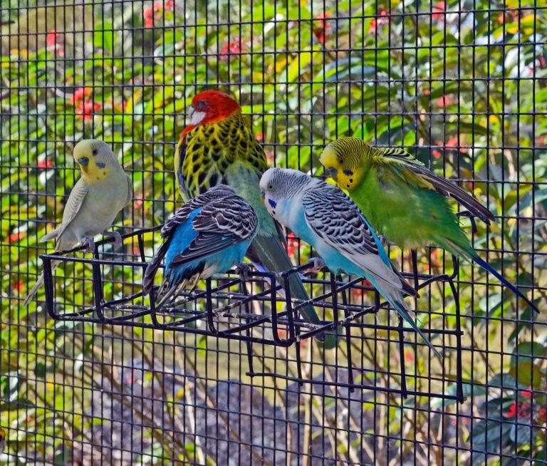 Viveiros para pássaros