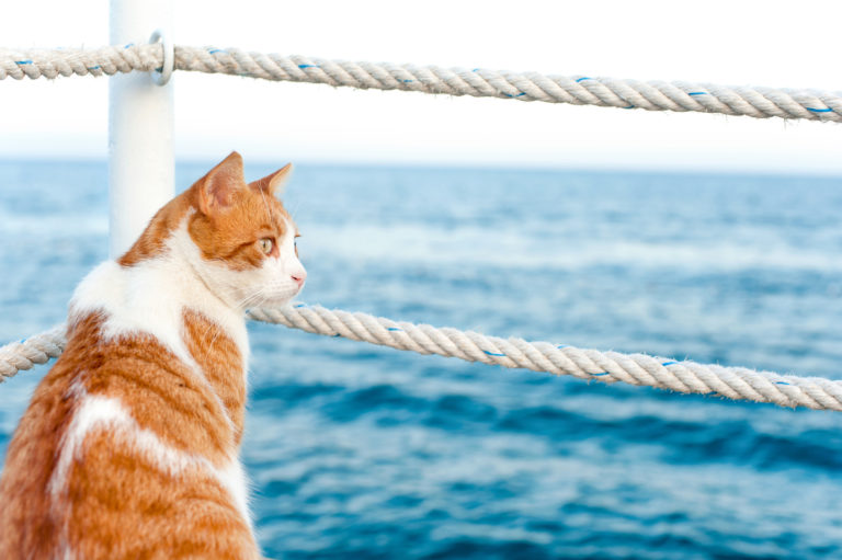 Viajar de barco com gato