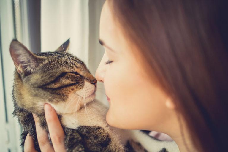 Os gatos são bons para a nossa saúde