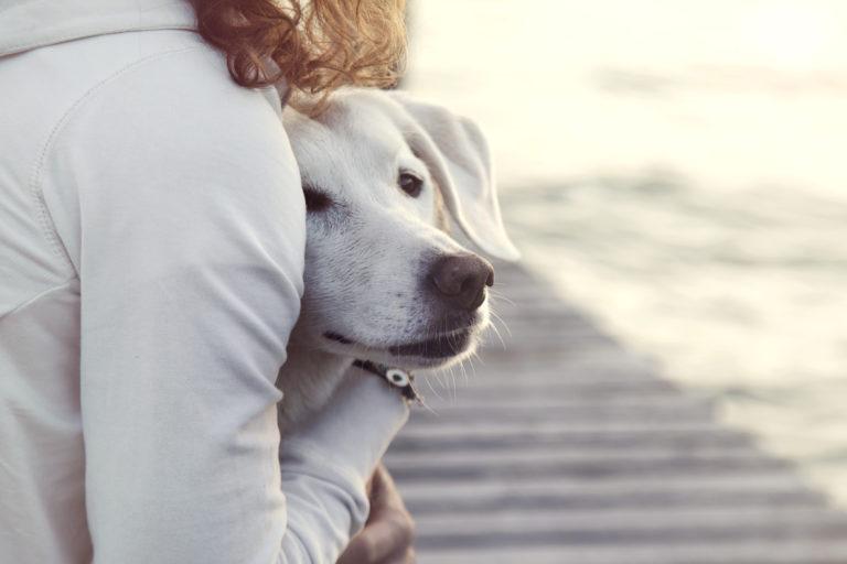 Cães ansiosos