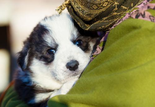 Adotar um cachorro duma associação protetora dos animais