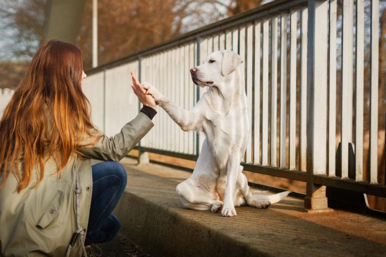 Passear com o seu cão