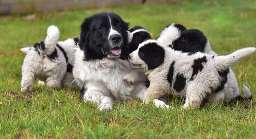 Proteção para cachorros