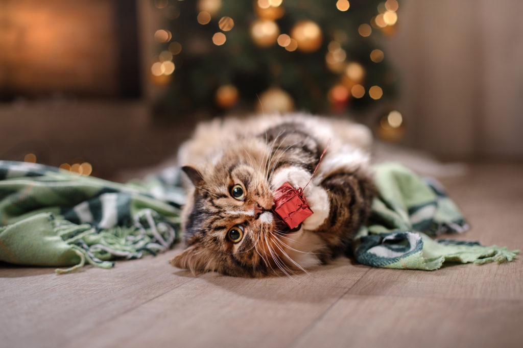 katze spielt mit weihnachtsgeschenk
