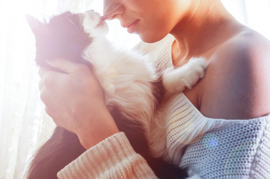 Toxoplasmose nos gatos: um gato que vai à rua está mais exposto à doença