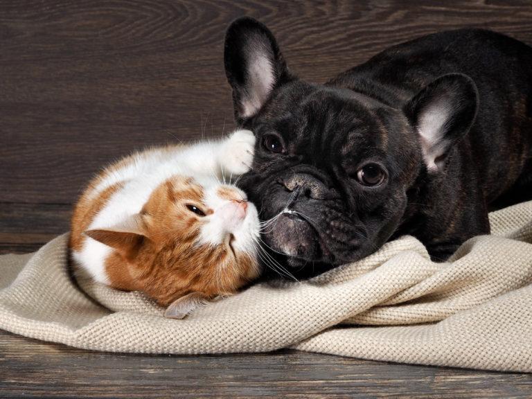 convivencia-caes-e-gatos