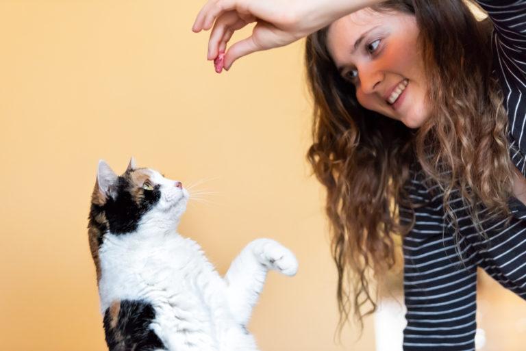 Truques para gatos