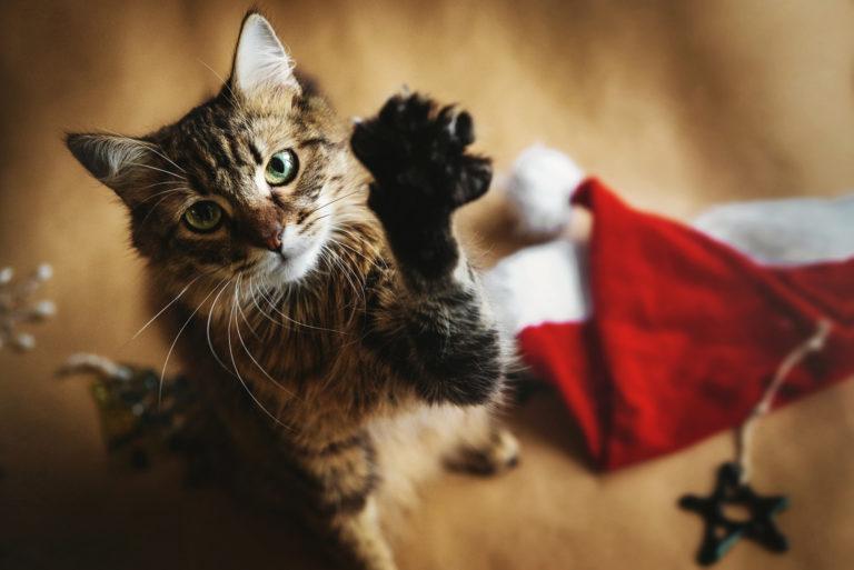 Dicas para um Natal em segurança com o seu gato