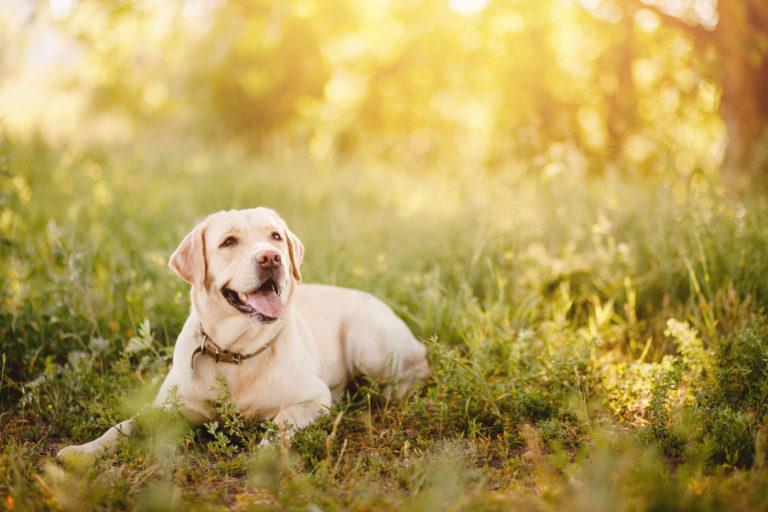 Dog-sitter ou hotel para cães, qual a melhor opção?