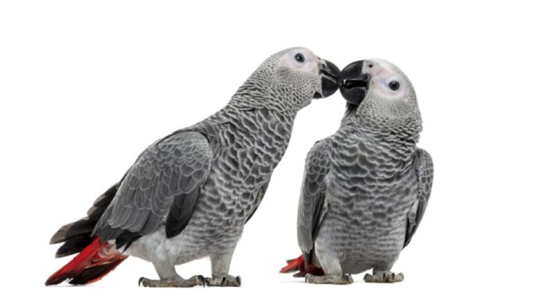 Ter só um pássaro ou vários?