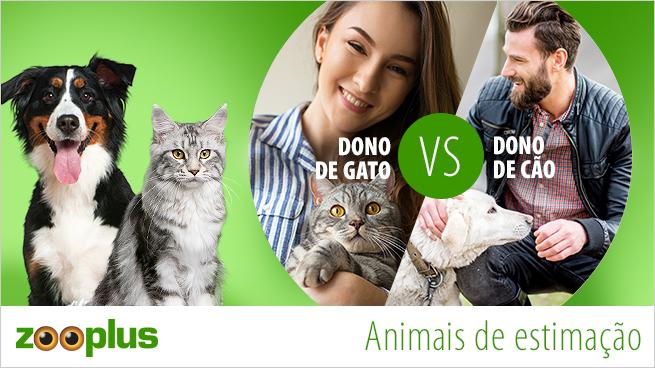 Cão ou gato: descubra qual o amigo de estimação certo para si