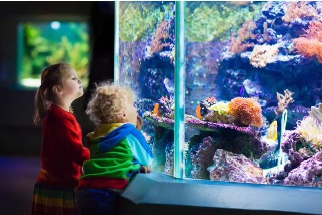 bater no vidro do aquário