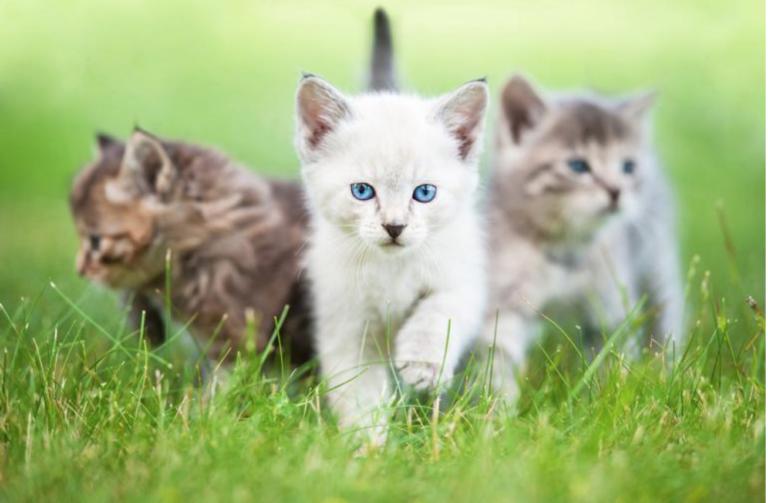 Como habituar o seu gato a ir ao exterior