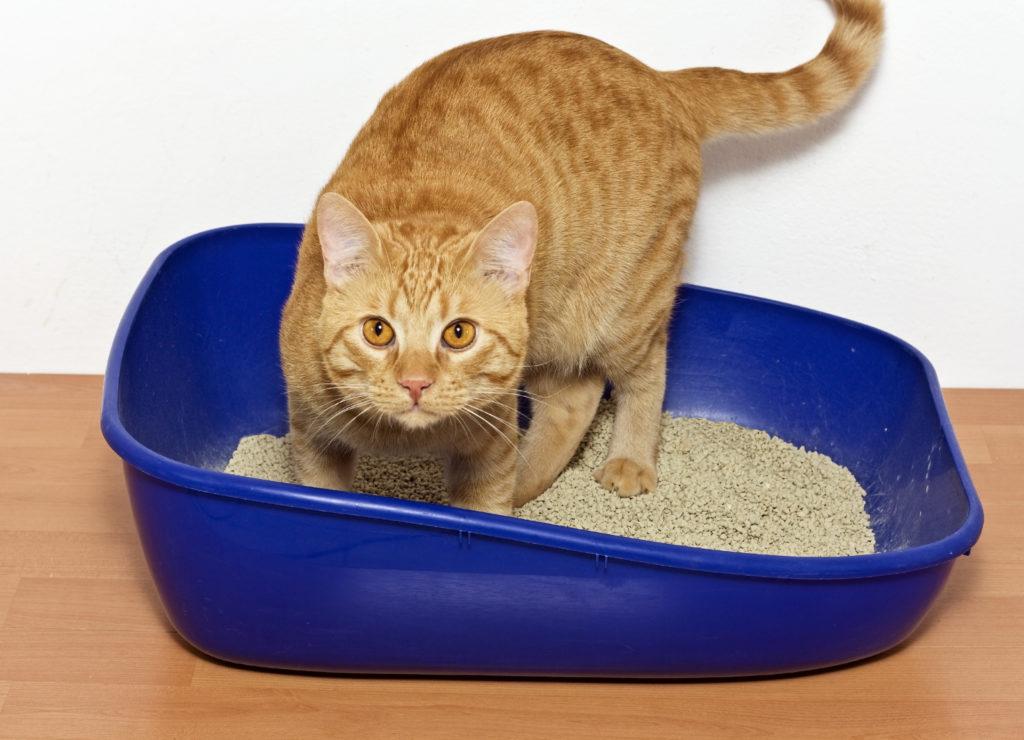 Katze im Katzenklos