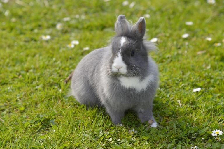 coelhos