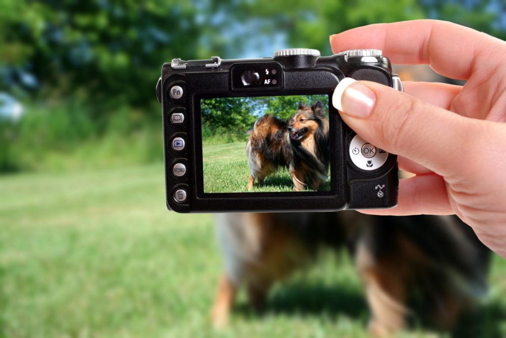 tips voor de perfecte hondenfoto