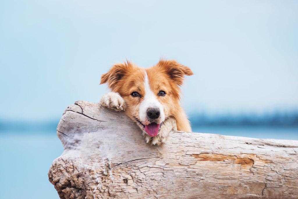 glücklich hund strand