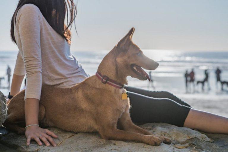 Praias para cães: descubra onde passar o verão com o seu cão