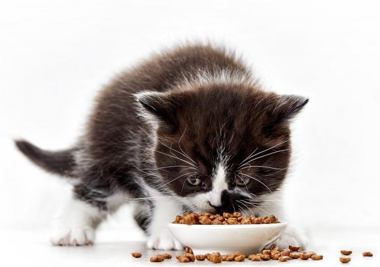 alimentacao-gatinhos