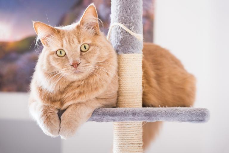 arranhadores-gatos